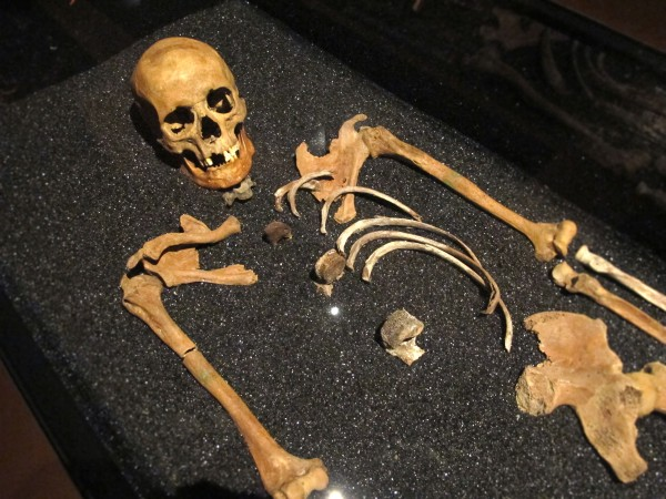 Vasa skeleton remains